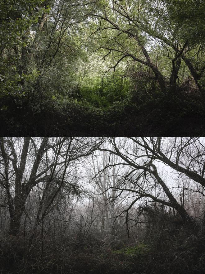 Transición natural, metamorfosis.