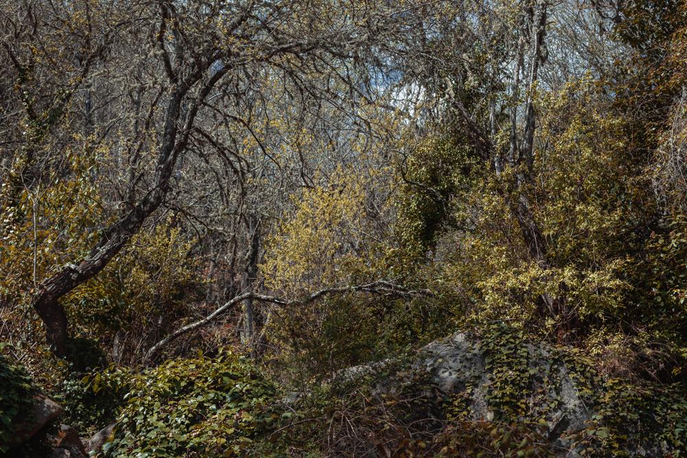 Entre Mogarraz y Monforte