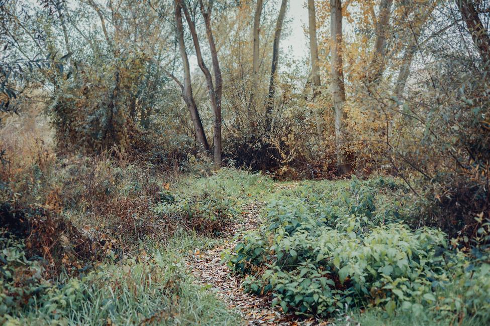 Vegetación cerca del Puente Romano de Salamanca